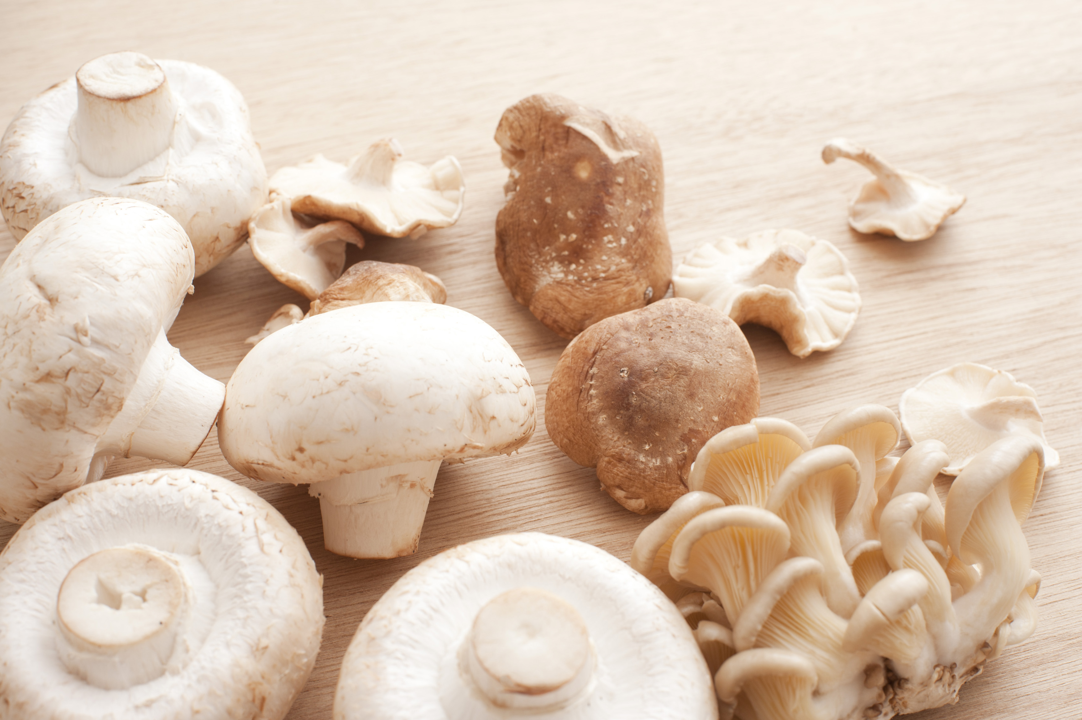 Varieties of fresh edible mushrooms with agaricus bisporus, shitake, and shimeji mushrooms in a random pile on a wooden counter top viewed closeup from above