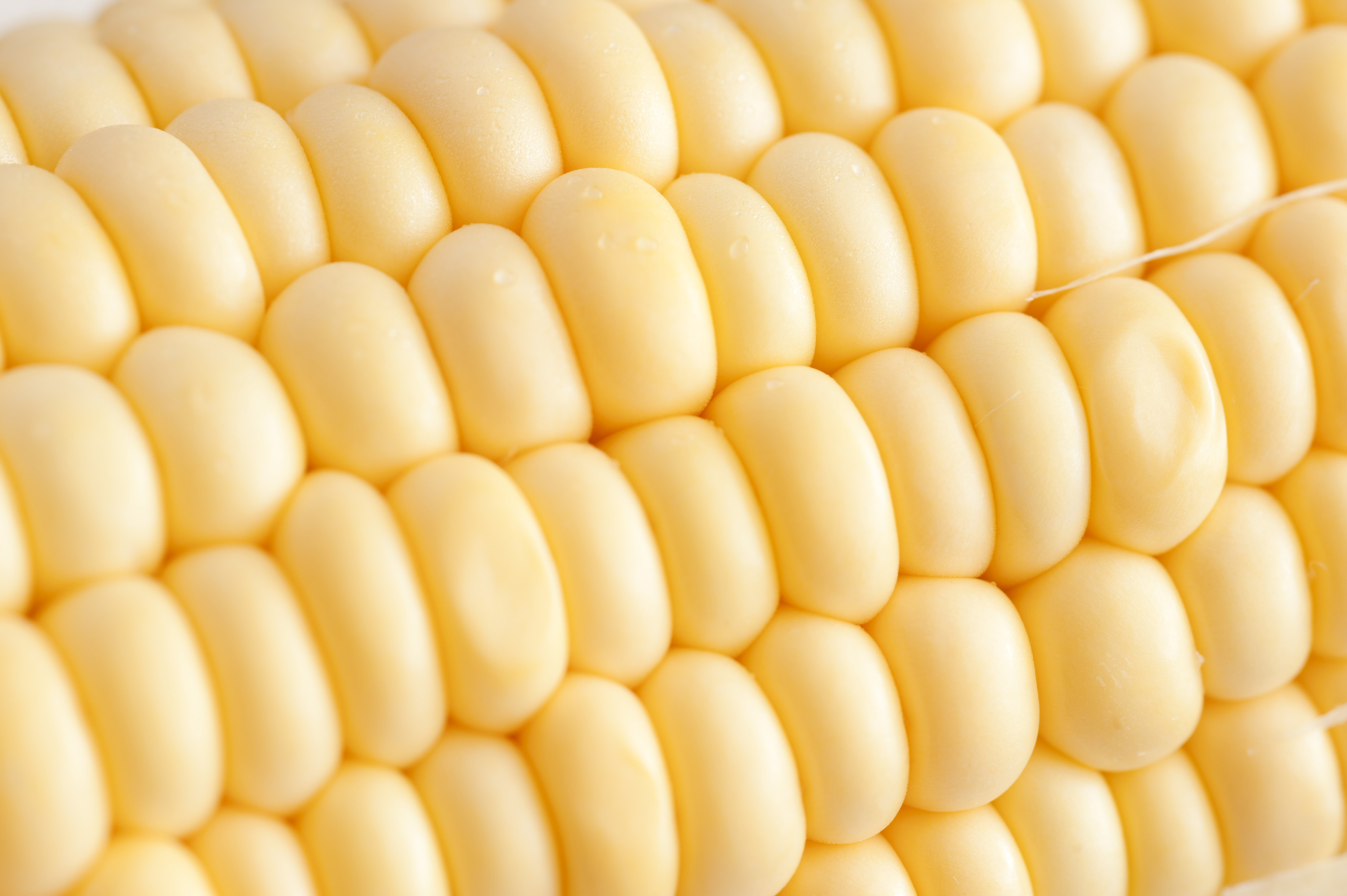 Use Of Corn Kernels At Home