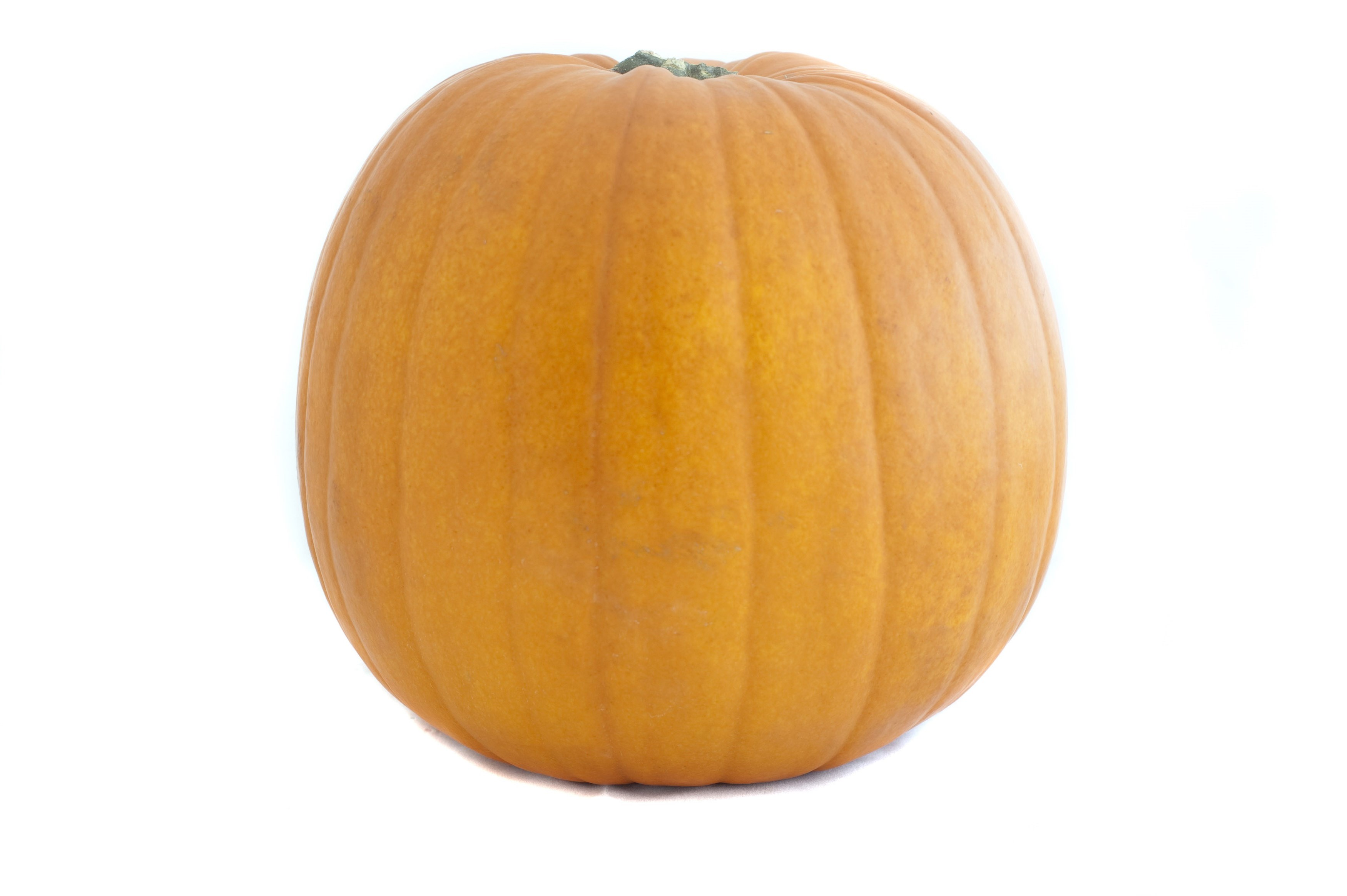 Single whole fresh pumpkin, a seasonal autumn squash used as a cooking ingredient and vegetable, on a white background