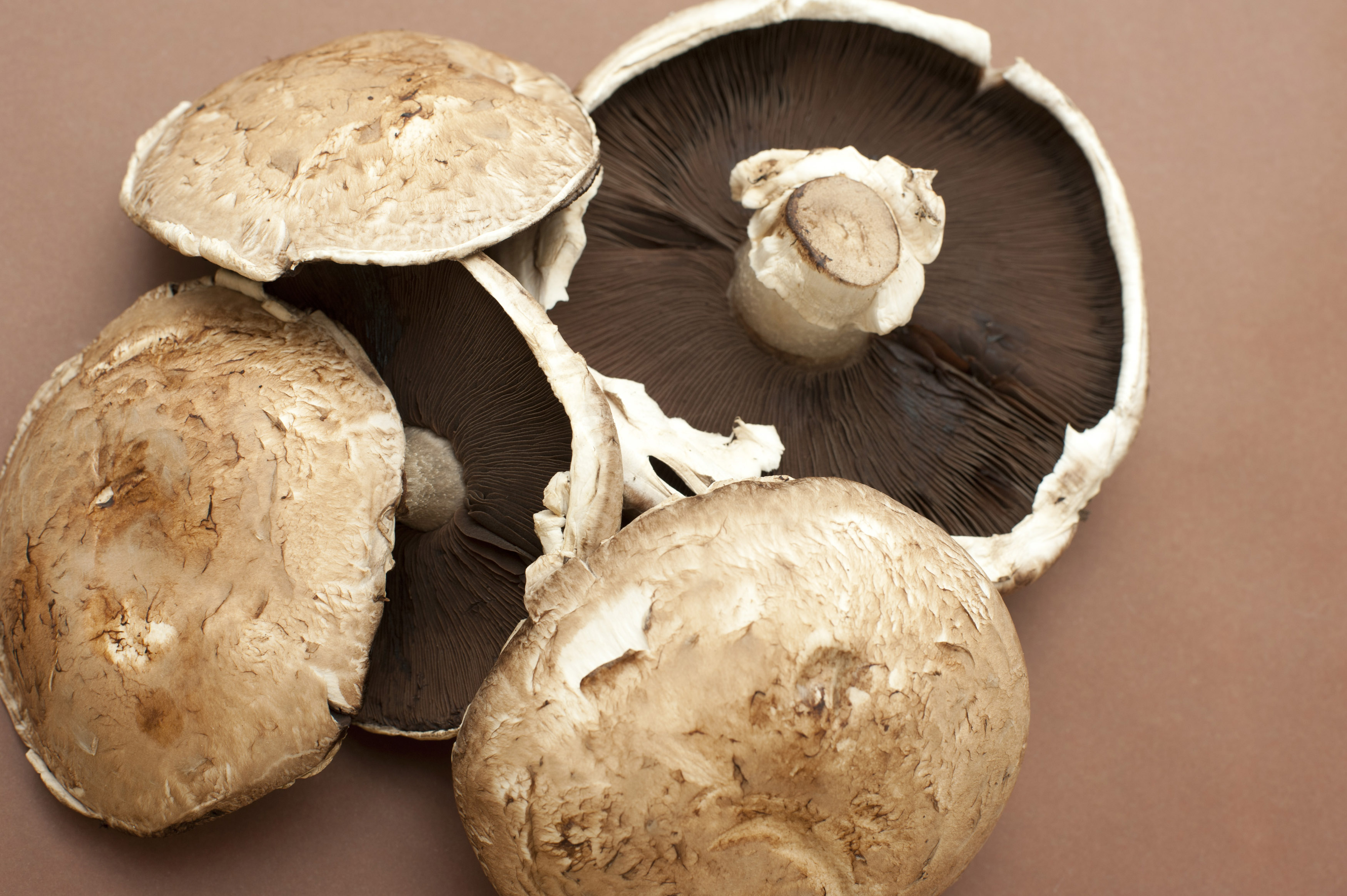 Fresh Large Cup Or Portobello Mushrooms Free Stock Image